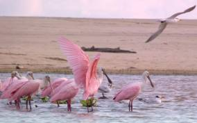 From Puerto Escondido: Birdwatching on a Boat