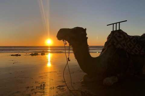 Agadir: 2-hour Sunset Camel Ride