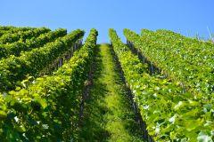 De Toulouse: Fronton Wine Tour