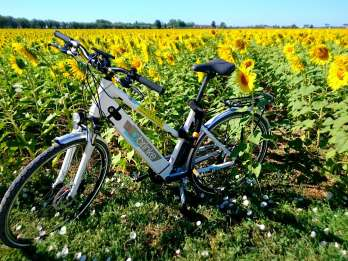 Pisa: Selbstgeführte E-Bike-Tour