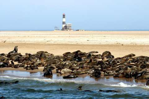 From Swakopmund or Walvis Bay: Pelican Point Peninsula Tour