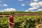 Full-Day Tour from Porto to the Douro Valley