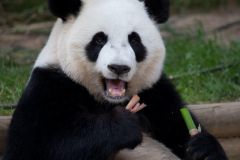 Zoo Atlanta: ingresso geral para compra antecipada