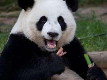 Zoo Atlanta: Vorverkauf für die allgemeine Eintrittskarte