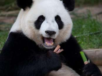 Zoo Atlanta: Standard-Ticket im Vorverkauf