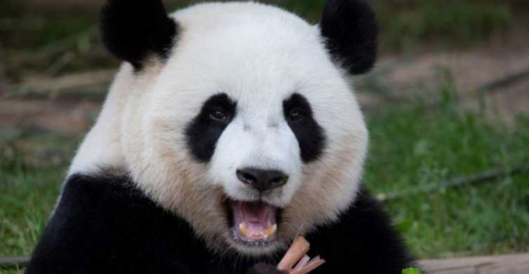 Zoo Atlanta: Advance Purchase General Admission Ticket