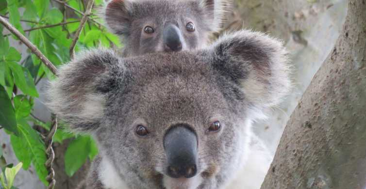 Byron Bay: Full-Day Wildlife Safari