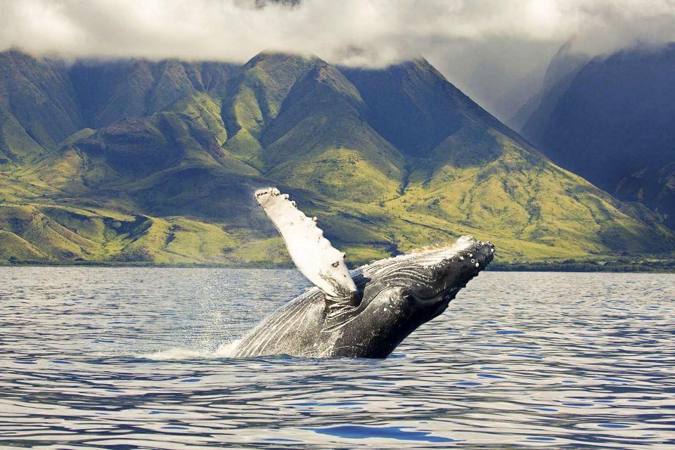 Oahu: Eco-Friendly West Coast Whale Watching Cruise