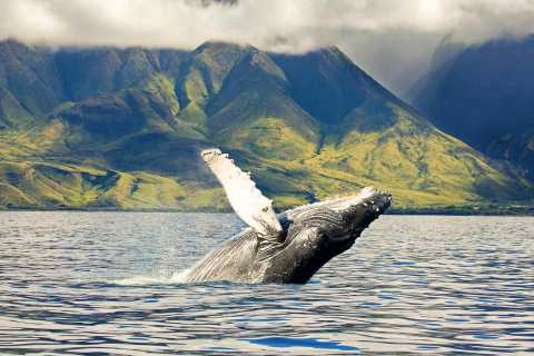 Oahu: Eco-Friendly West Coast Whale Watching Cruise