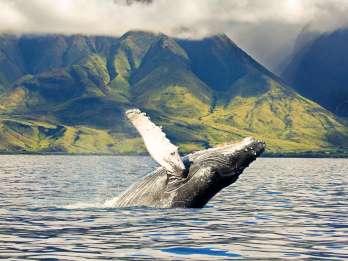 Oahu: Umweltfreundliche Westküsten-Walbeobachtungskreuzfahrt