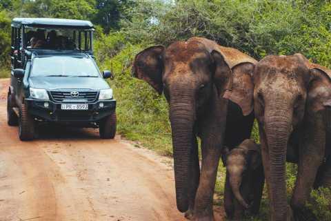 Udawalawe: Private Udawalawe National Park Safari Tour