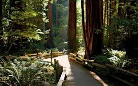 Full-Day Muir Woods with Napa and Sonoma Wine Tour