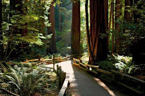 Muir Woods, Napa e Sonoma: tour con degustazione di vini