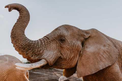 Vanuit Kaapstad: 2 dagen glamping en safari