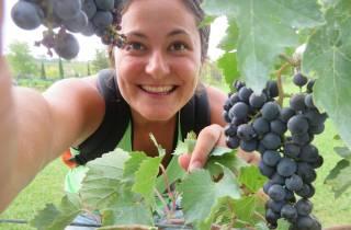 Von Rom: Ganztagesausflug in die Toskana mit Weinprobe