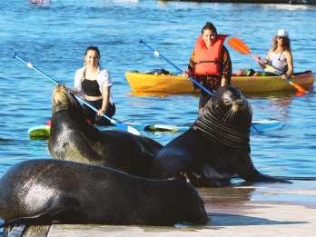 Marina Del Rey: Kajak- und SUP-Tour mit Seelöwen