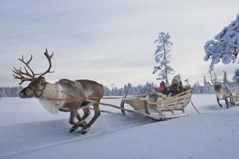 Levi: Lapland Reindeer Safari