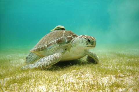 Bahía de Akumal: cenotes y esnórquel con tortugas