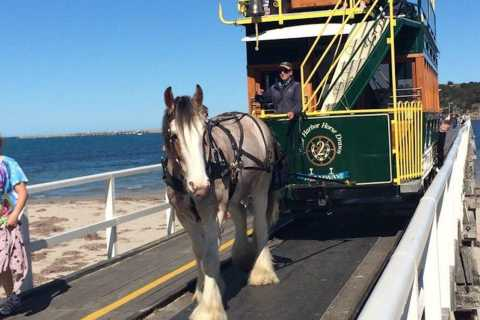 South Australia: Guided Full-Day Highlights Tour
