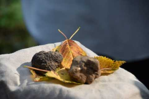 From Turin: Half-Day Truffle Hunting and Lunch in Piedmont