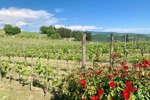 From Florence: Chianti Hills Wineries Tour with Tasting