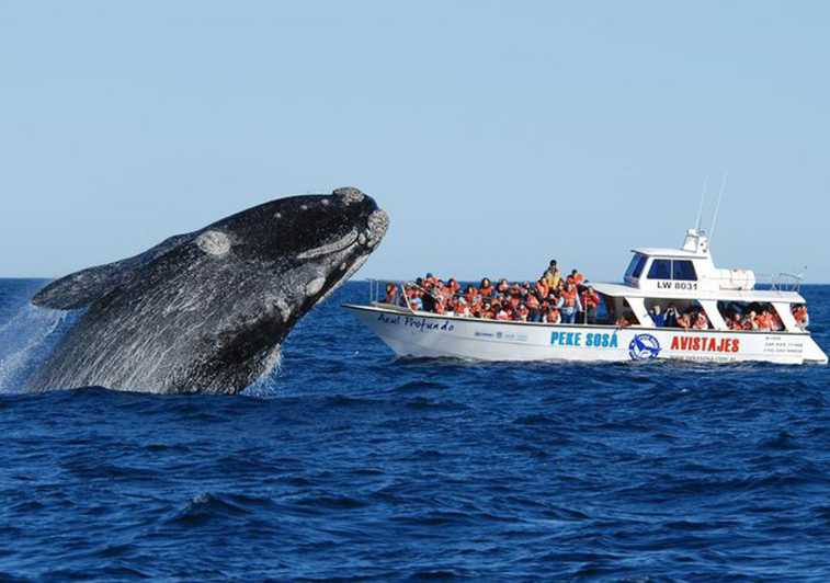 Puerto Madryn: Peninsula Valdés with Optional Whale Watching - Puerto Madryn,  Argentina | GetYourGuide