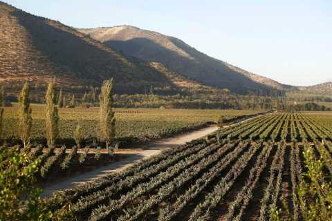 Santiago: Half–Day Santa Rita Vineyard Tour