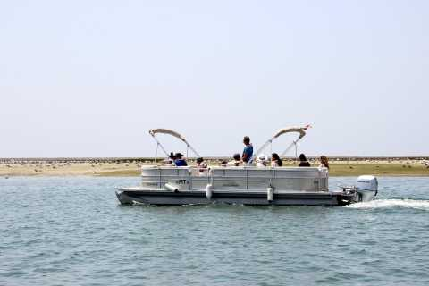 From Faro: 2-Hour Guided Bird Watching Boat Trip