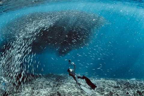 Cebu: Deep-Sea Diving at Moalboal and Pescador Island