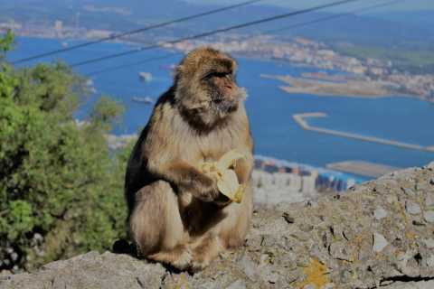 Desde Sevilla: viaje de día completo a Gibraltar