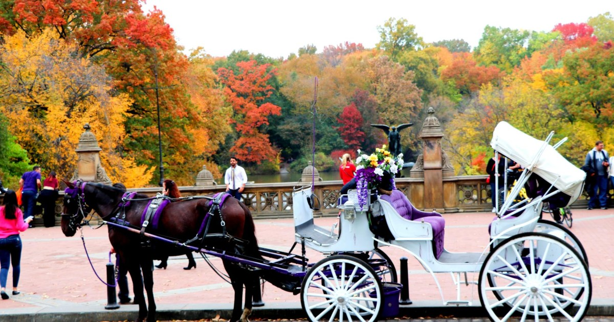 New York City: Central Park Horse-Drawn Carriage Ride | GetYourGuide
