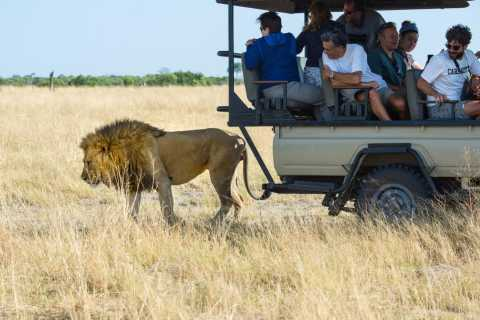 Maun: Private Guided Day Safari in Moremi Game Reserve