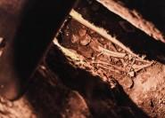 Rom: Katakomben & Krypta-Tour mit römischen Aquädukten