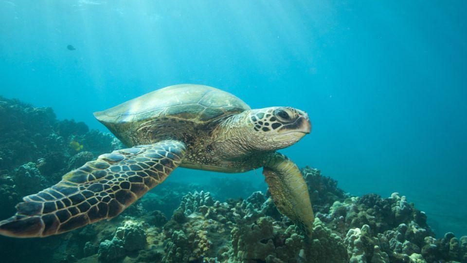 Hilo: Sea Turtle Lagoon and Black Sand Beach Snorkel