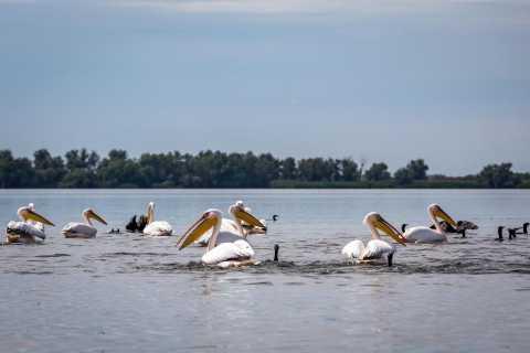 Danube Delta - 2-Day Tour from Bucharest
