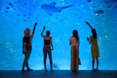 Phuket: ingressos para Aquaria Phuket com o Trick Eye Museum