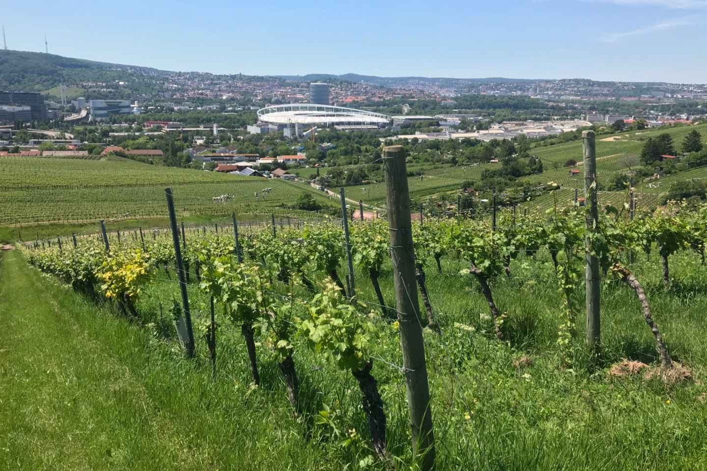 Stuttgart: VDP-Weintour