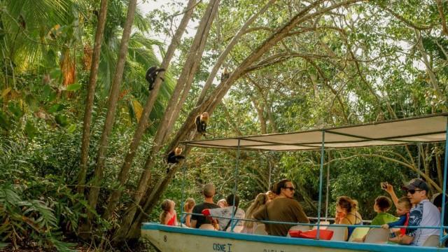 Van Manuel Antonio: 4-uur durende mangrove-boottocht