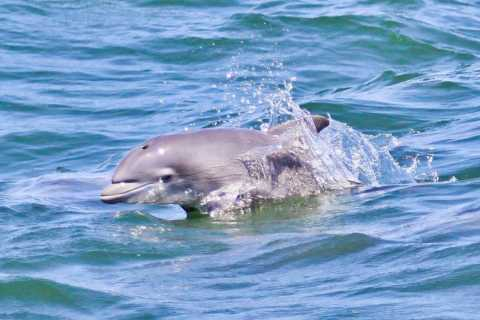 Atlantic City: aventura de cruceros por el océano para observar delfines
