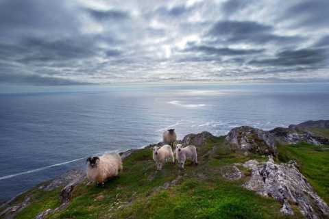 From Cork: Guided Full-Day West Cork to Mizen Head Tour