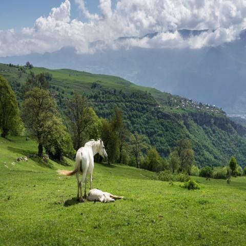 Yerevan: 1-daagse paardrijden in de weelderige regio Lori