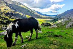 De Manchester: excursão turística de um dia a Gales do Norte