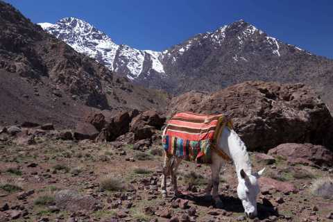 Atlas and Agafay Day Tour with Sunset Camel Ride