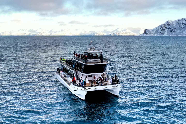 Tromsø: Whale Watching-Tour mit Hybrid-Elektro-Katamaran