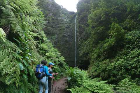 Madeira Island: Caldeirão Verde Levada Walk