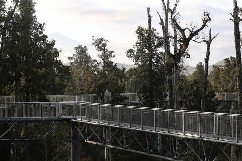 Hokitika: West Coast Treetop Walkway Entrance Ticket
