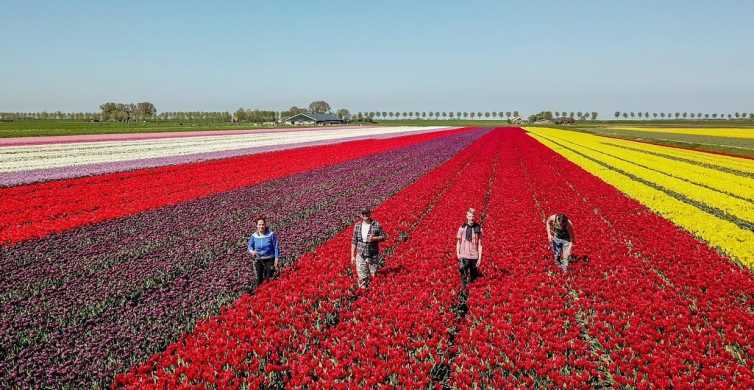 Från Amsterdam: Tulip Fields, Windmills & Local Experience