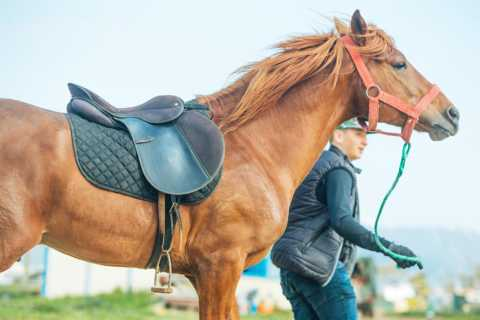 Tangier: 1-Hour Horseback Riding Experience for Beginners