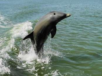 Everglades-Nationalpark: Vogel- und Delfin-Fototour