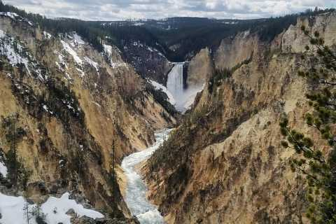 Full-Day Yellowstone Lower Loop Tour from Jackson, Wyoming